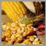 Questa immagine ha l'attributo alt vuoto; il nome del file è cornproteins.png