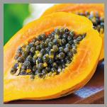 Questa immagine ha l'attributo alt vuoto; il nome del file è papayaextract.png
